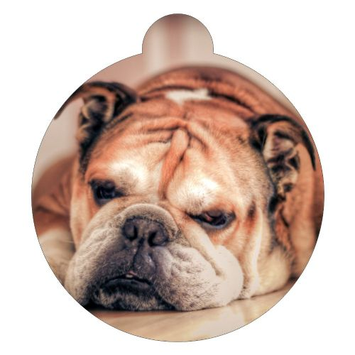 Bulldog red  Picture ID tag